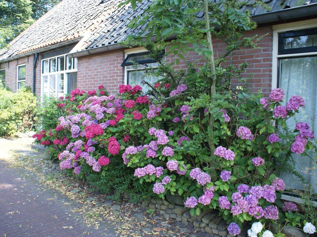 ''Onder de Eiken'' - bloemen in de zomer