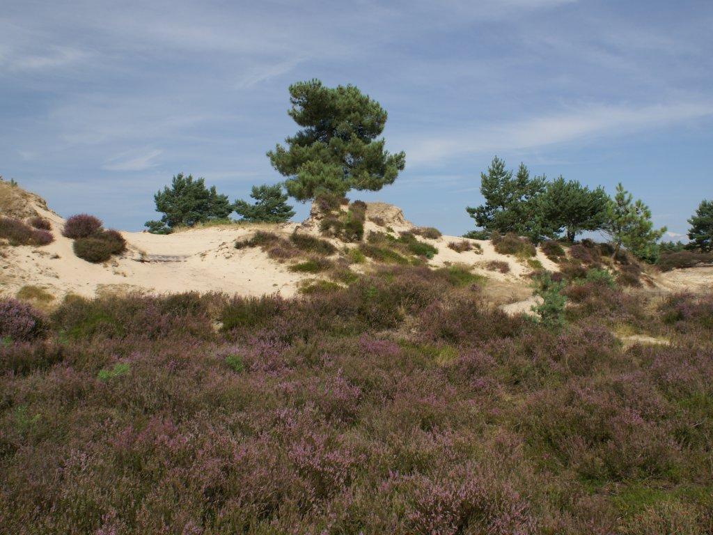 Heide, bos, zandduinen en dit alles in de directe omgeving